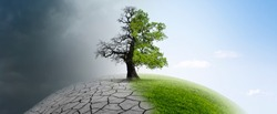 Tree on a globe in climate change