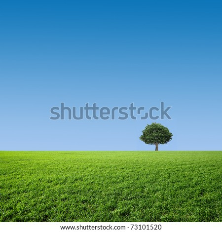 tree on a green meadow