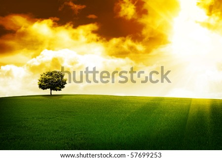 Tree on a hill at sunset