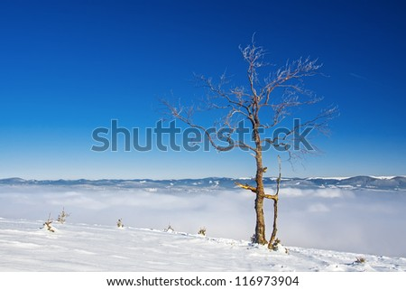 Tree on a hill, mountain landscape