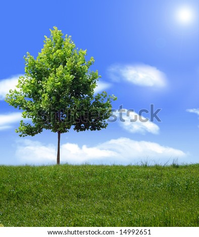 Tree on a hill on a bright Summer day