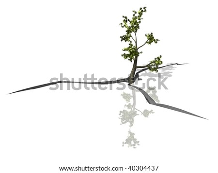 Tree on cracked earth