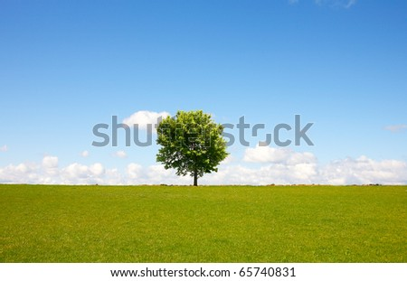 Tree on field - stock photo