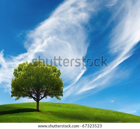 Tree on field in sunny day - stock photo