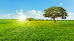 Tree on grass green landscape, blue sky and mountains background, Sunset or sunrise light.