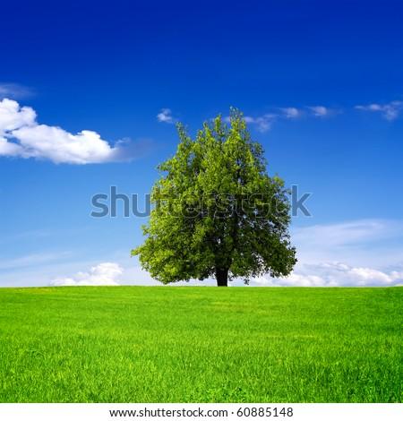 Tree on green field #60885148