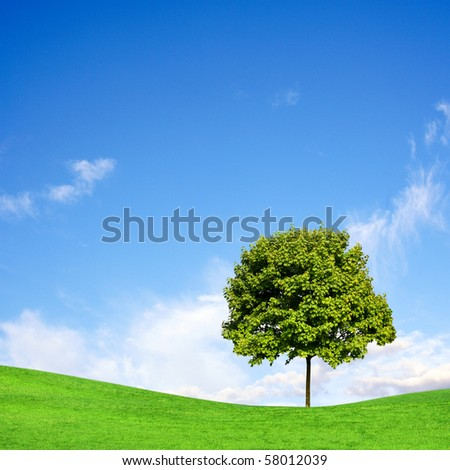 Tree on green field under blue sky