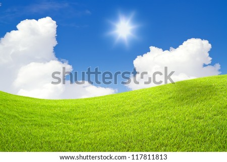 tree on green grass and blue sky