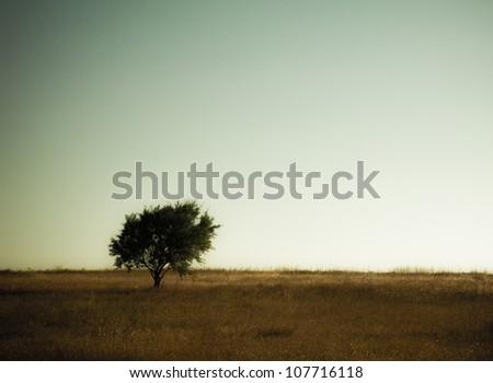 Tree on Green Land. High resolution photo.