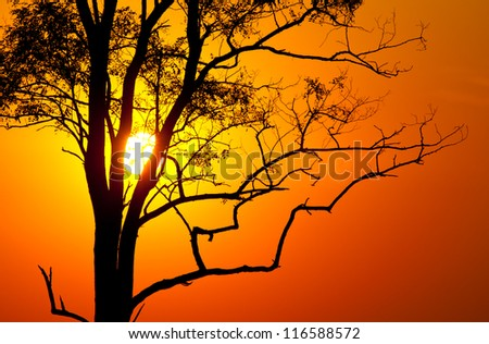 Tree on hot  sunset background