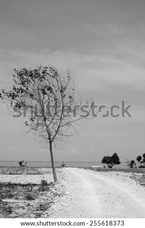 Tree on nobody beach (Black and white)