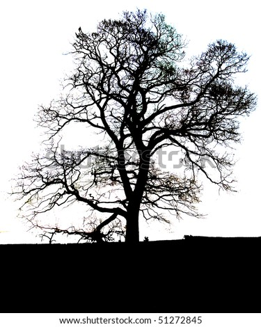 Tree on plain/white background