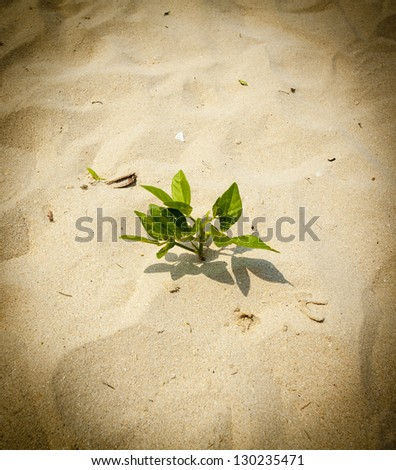 tree on sand, young green leaf tree new born on white sand land processed black vignette