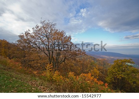 Tree on side of mountain overlooking  valley with fall colors - Blue Ridge Parkway, VA