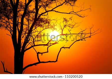 tree on sunset background