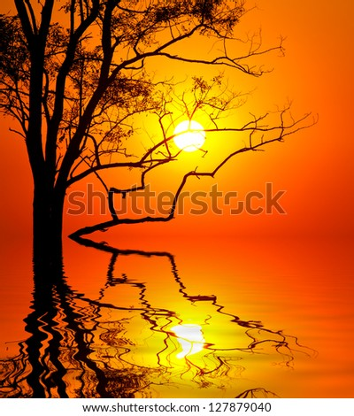 tree on sunset background  with water reflection