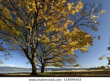Tree on the beach in the fall colours