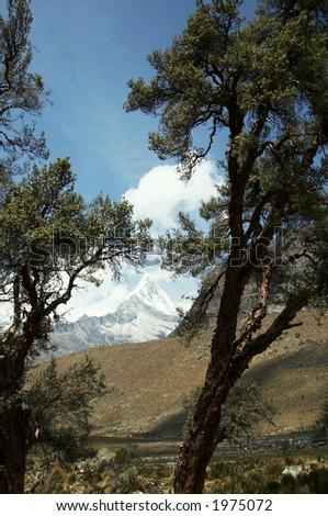 Tree on the Cordilleras mountain
