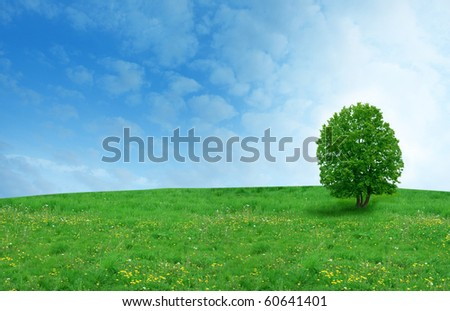 tree on the dandelion field