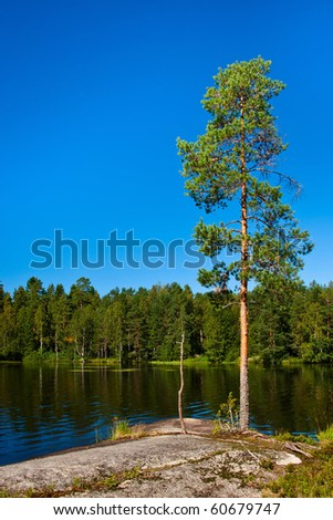 Tree on the lake shore in Finland