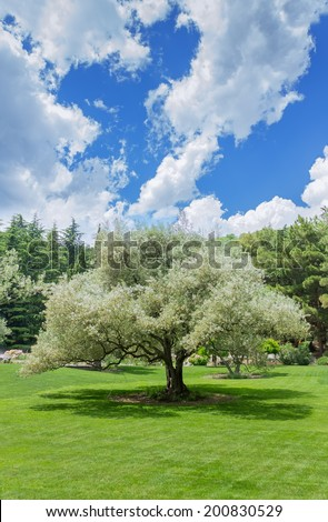 tree on the lawn  tree on the lawn on a sunny summer day photo Crimea
