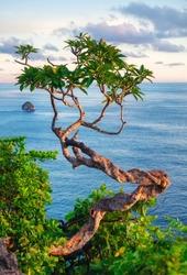 Tree on the sky and sea background. Landscape during sundown. Kelingking beach, Nusa Penida, Bali, Indonesia. Travel - image