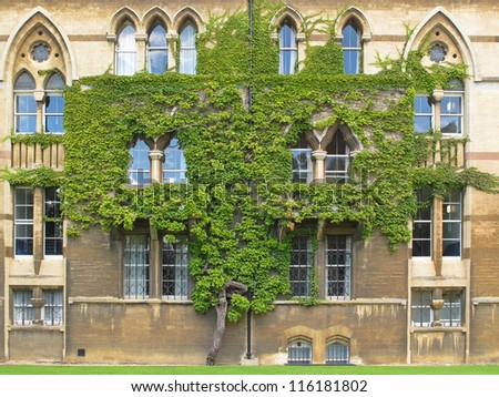 Tree on wall of The Meadow Building, Christ Church college in Oxford, United Kingdom.
