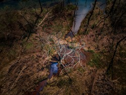 Tree out of the water - an aerial view via drone looking down on a tree coming out of the milky water in the wetland.  Photo taken in a wetland in Beavercreek, Ohio.