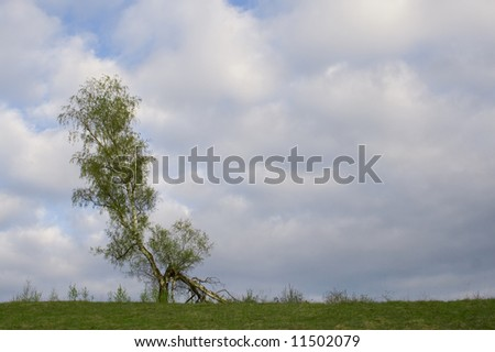 tree over cloudy sky
