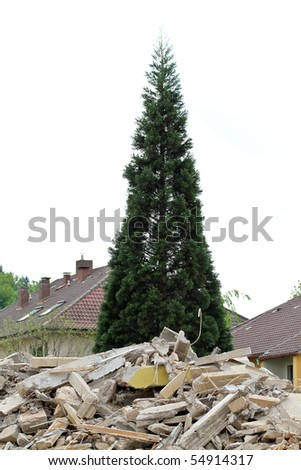 tree over destroyed building