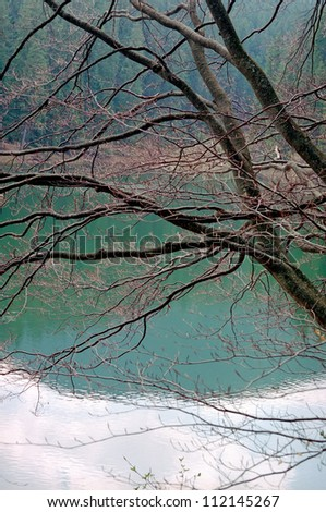 tree over water - stock photo