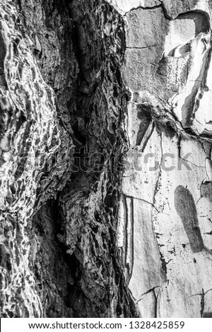 Tree Pine Bark close up as textured layered effect and background image in black and white taken at La Palma, Canary Islands, Spain, National Park  after forest fires