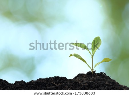 Tree plant grown, green background #173808683