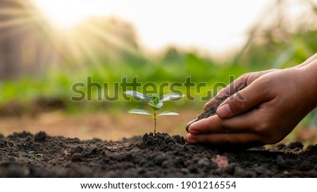 Tree planting and tree planting, including planting trees by farmers by hand, plant growth ideas. stock photo