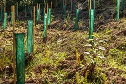 Tree Planting Using Khowutzun Freegro Tree Protectors