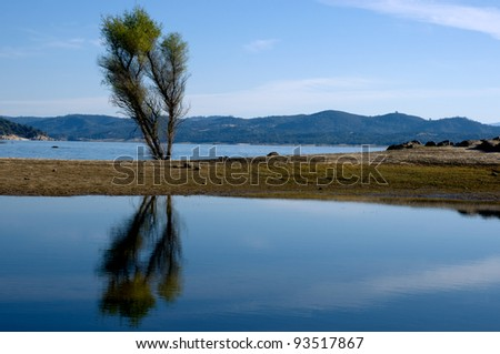 Tree Reflected In Folsom Lake