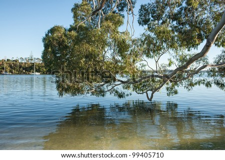 Tree reflected over waters edge.