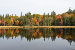 Tree reflection in Algonquin Park