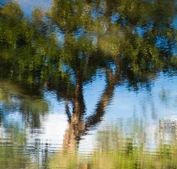 tree reflection river