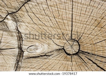 Tree Ring Background 2