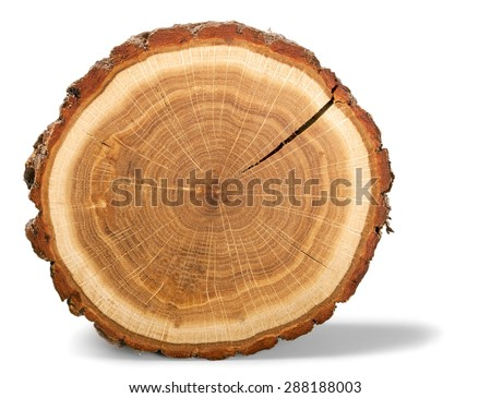 Shutterstock Tree Ring, Log, Wood.
