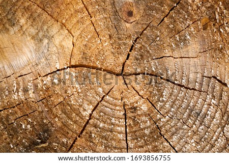 Tree rings old weathered wood texture with the cross section of a cut log. Stock foto ©