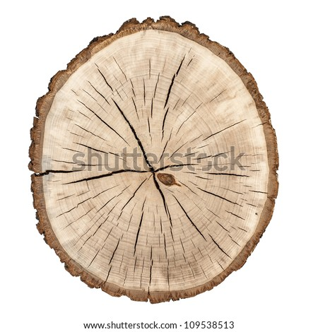 Tree rings. Wooden background