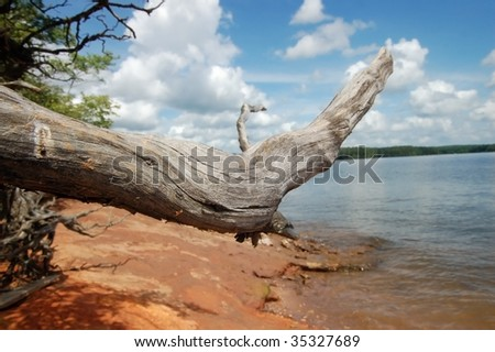 Tree Root at Lake Shore, Jordan Lake, North Carolina