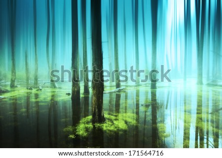 Stock Photo Tree root covered the entire floor