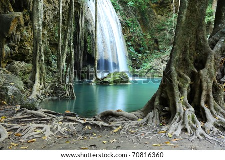 Tree roots and  mountain stream flowing