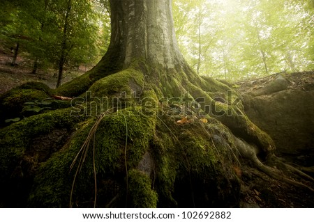 tree roots and sunshine in a green forest #102692882