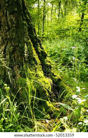 Tree, roots covered in moss #2