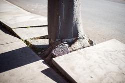 Tree Roots Destroy The Sidewalk