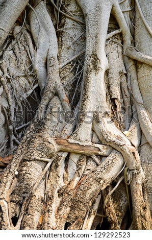 Tree roots on the ground.